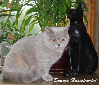 Кастрация и стерилизация котов и